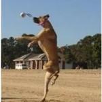 """Kaip """"paruošti"""" šunį treniruotėms"""