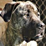 Kaip apsaugoti šunį nuo perkaitimo?