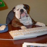 Šuo gali sumažinti darbe juntamą stresą