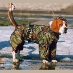 Post trauminio streso sindromas šunims