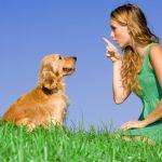 Šuns drausminimas vs šuns mokymas