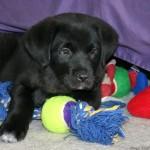 Kodėl šunims nusibosta kai kurie žaislai?