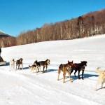 Dresūra žiemą – naudinga žmonėms veikla su šunimis