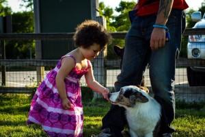 Šunys, mokyti klikeriu, nebijo vaikų