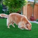 Dirbtinė žolė šunims