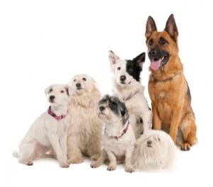 Many-Dogs