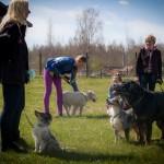 Kaip sukurti ryšį su šunimi