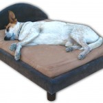 Šuns miegas šeimininko lovoje