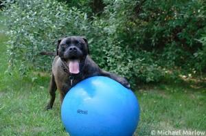 dog_sitting_having_a_ball_1_signed-e1335624570958