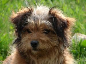 jaunas-suniukas