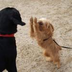 Kiek žmonių kalbos reikia šuniui?