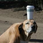 Mano šuo manęs neklauso!