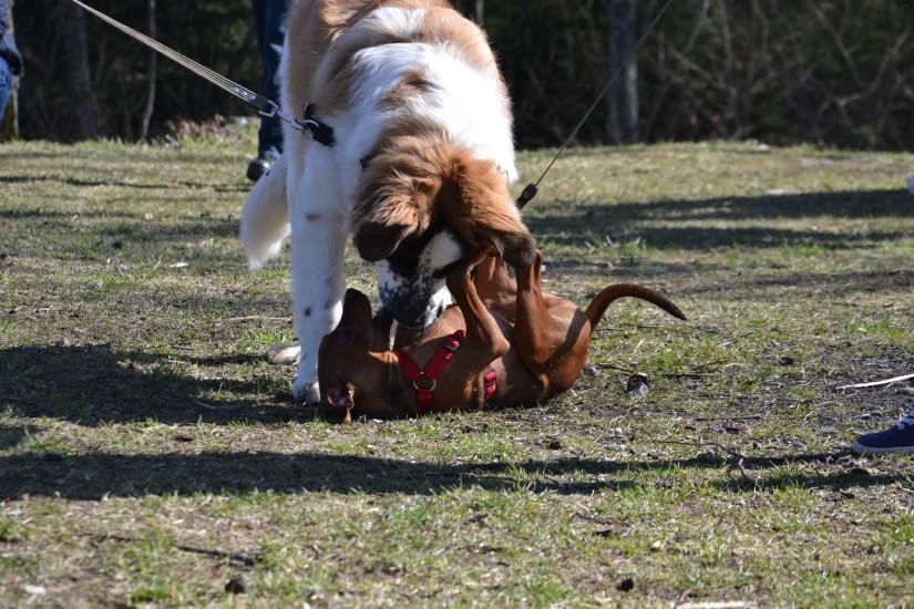 Šuo dominuoja?