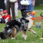 Ką daryti, jei šuo nenori su jumis žaisti dresūros aikštelėje?