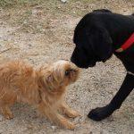 Ko kiekvienas šeimininkas galėtų pasimokyti iš savo šuns
