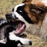 """Gyvenimas su """"nepatogiu"""" šunimi iš prieglaudos"""