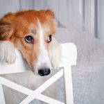 Kodėl šuo loja likęs vienas?